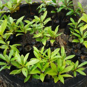 Community-based mangrove restoration