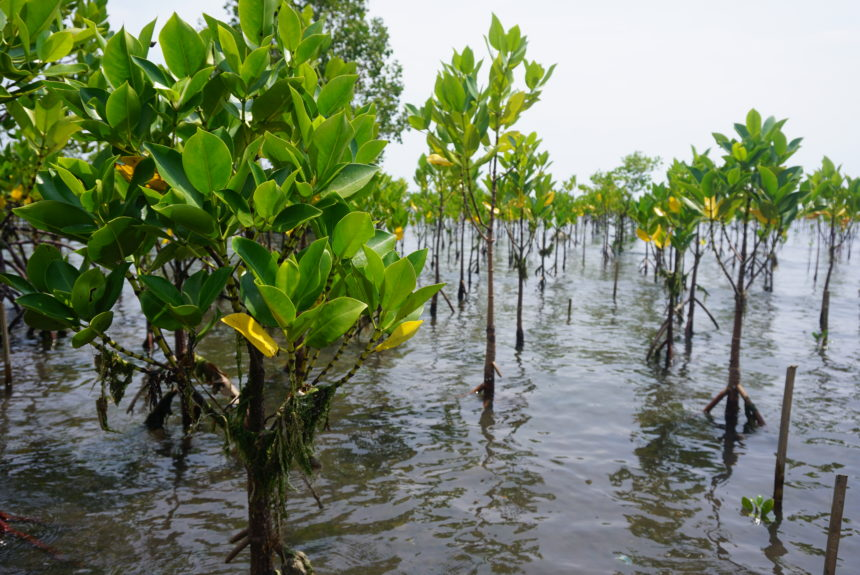 What mangroves mean to the people of Salay, Mindanao: A perception survey to gather insights into the knowledge, attitudes and needs of the local community